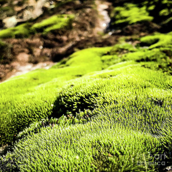 Photograph - Tiny Forest 1 by Atousa Raissyan