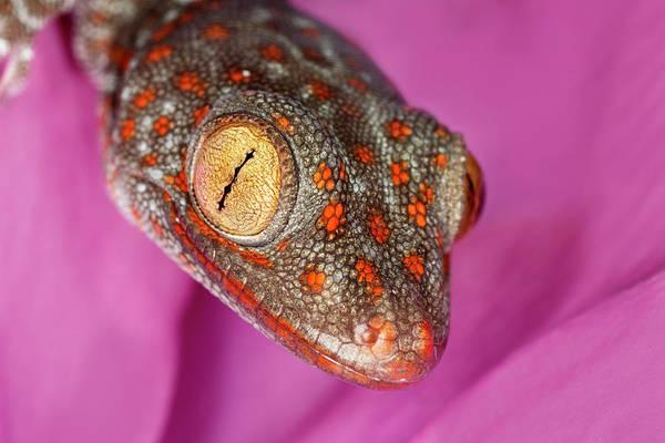 Wall Art - Photograph - Geckos Close-up by Adam Jones