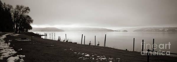 Photograph - Geese Along Lake Coeur D'alene by Matthew Nelson