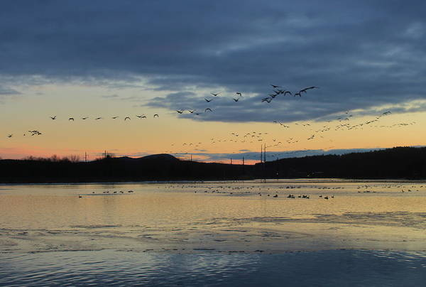Wall Art - Photograph - Geese At Dusk On The Connecticut River by John Burk