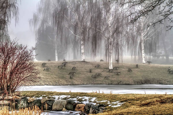 Wall Art - Photograph - Geese In The Mist by Donna Kennedy
