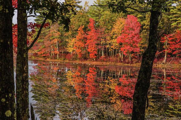 Photograph - Geese On Quabbin Reservoir by Jeff Folger