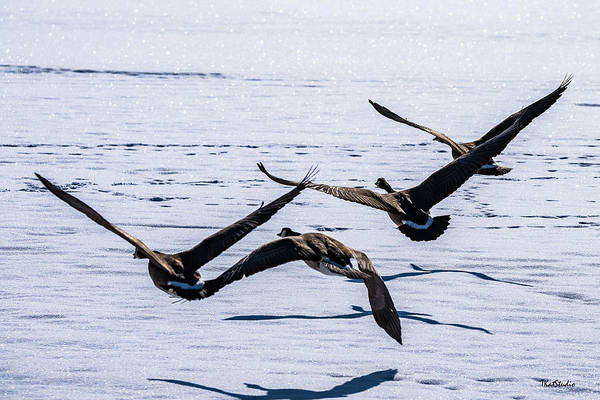 Photograph - Geese Over Frozen Kitring Pond by Tim Kathka