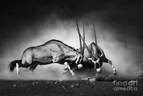 Wall Art - Photograph - Gemsbok Dual Artistic Processing by Johan Swanepoel