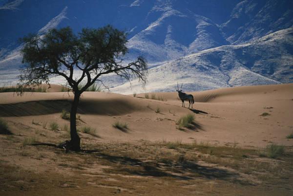 Wall Art - Photograph - Gemsbok In Namibia by David Hosking