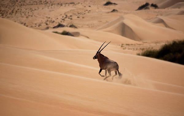Wet Sand Photograph - Gemsbok, Namib Desert, Namibia by Mint Images/ Art Wolfe