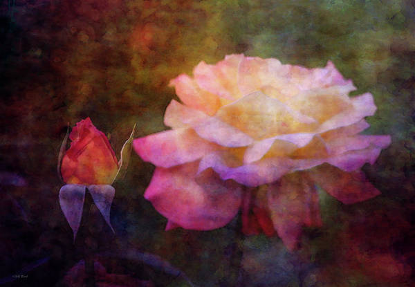 Photograph - Generations 5567 Idp_2 by Steven Ward