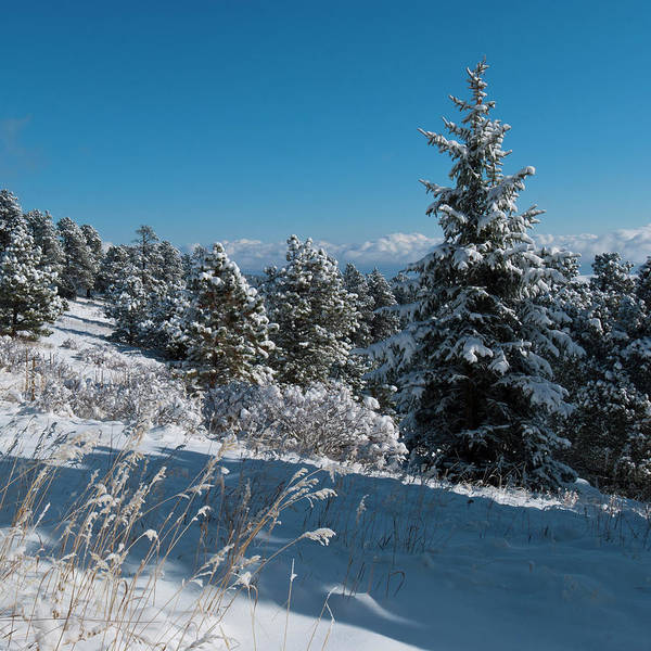 Photograph - Genesee Mountain Winter Landscape by Cascade Colors
