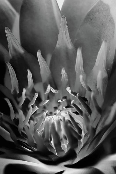 Water Lilies Photograph - Genesis by Az Jackson