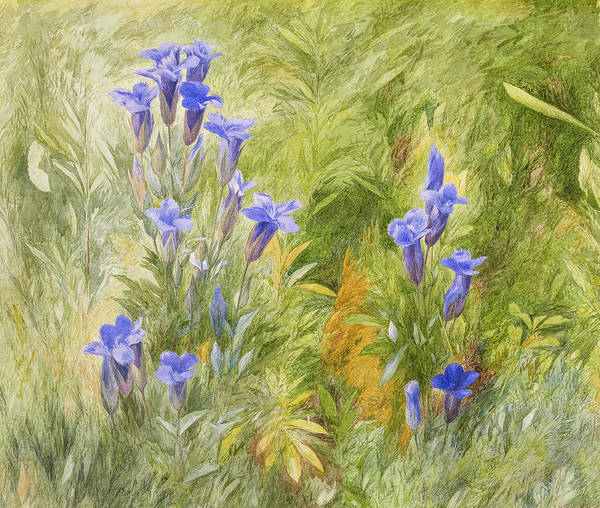 Wall Art - Painting - Gentians, 1870 by John Henry Hill