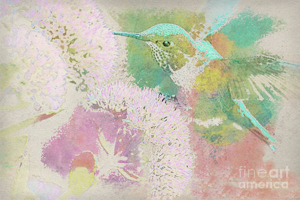 Green Winged Teal Mixed Media - Hummingbird In-flight Watered by Banyan Ranch Studios