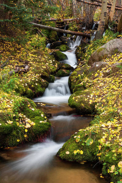 Photograph - Gentle Stream by Aaron Spong
