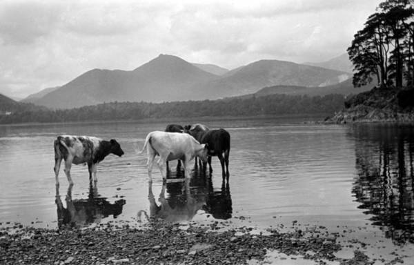 Agriculture Photograph - Geography, Travel, Pic Circa 1940s by Popperfoto