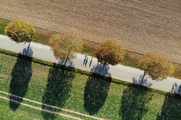 Photograph - Geometric Landscape 10 Trees And Shadows Aerial View by Matthias Hauser