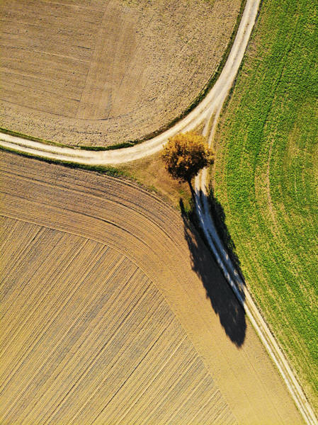 Felder Wall Art - Photograph - Geometric Landscape 12 Brown And Green Fields And A Tree by Matthias Hauser