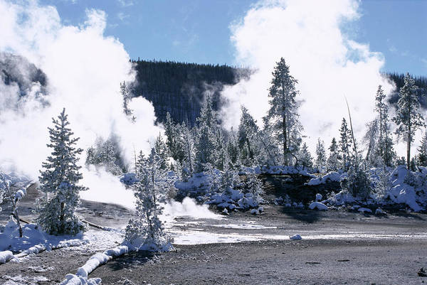 Frosted Glass Photograph - Geothermal Steam, Frosted Trees And by Tony Waltham / Robertharding