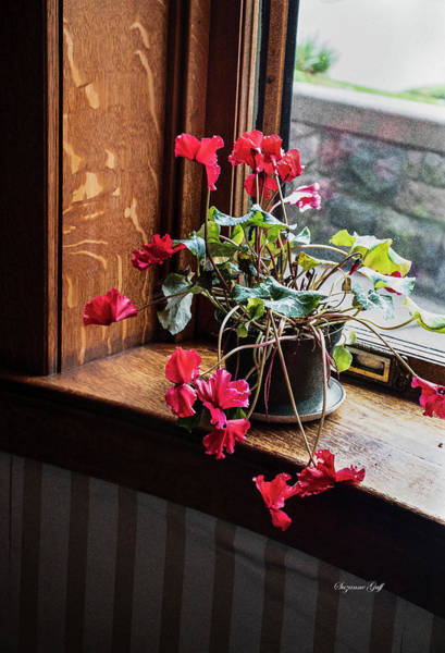 Wall Art - Photograph - Geranium In The Window by Suzanne Gaff