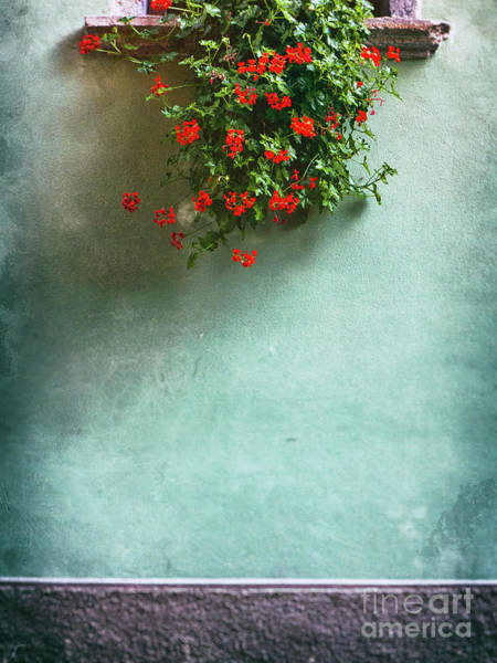 Photograph - Geraniums On A Wall by Silvia Ganora