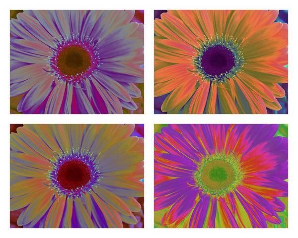 Wall Art - Photograph - Colorful Gerbera Daisies Pop Art by Dora Sofia Caputo Photographic Design and Fine Art