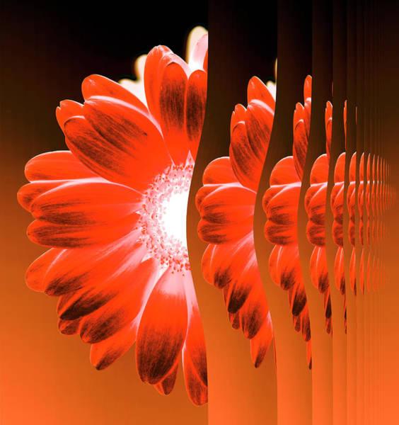 Digital Illustration Digital Art - Gerbera Flower Vertical Slivers by Eversofine