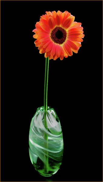Wall Art - Photograph - Gerbera In Green Glass Vase by Jean Noren