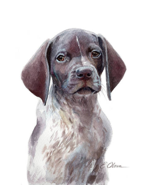 German Pointer Painting - German Shorthaired Pointer Pup by Emily Olson