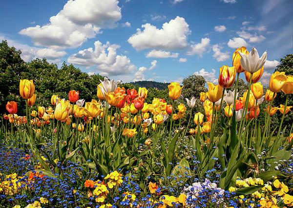 Photograph - German Springtime by Endre Balogh