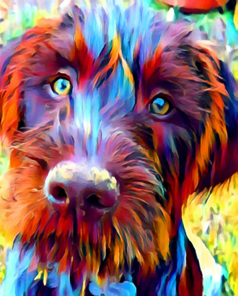 German Pointer Painting - German Wirehaired Pointer by Chris Butler