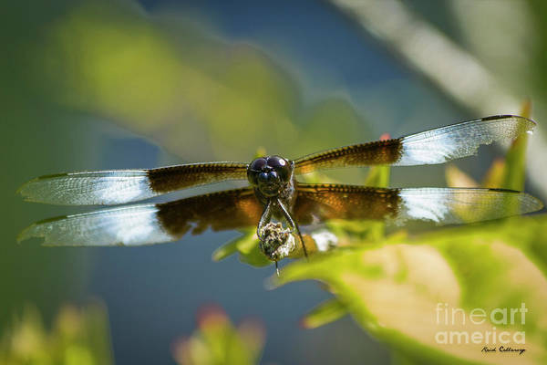 Wall Art - Photograph - Get A Grip 2 Dragonfly Close Up Art by Reid Callaway