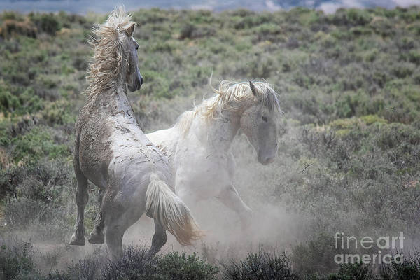 Photograph - Ghost Dancers by Jim Garrison