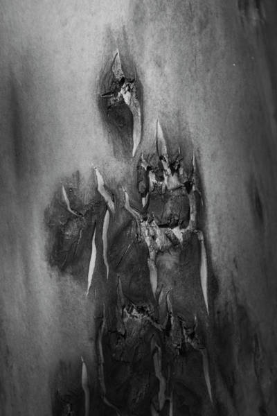 Photograph - Ghost Abstract Tree Bark by Yulia Kazansky