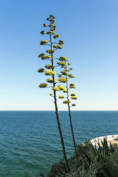 Photograph - Giant Flora -  by Georgia Mizuleva