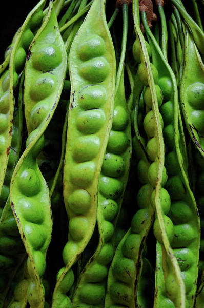 Retail Photograph - Giant Green Bean by Persefoni Photo Images