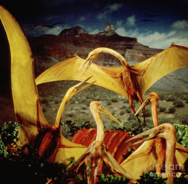 Photograph - Giant Pterosaurs Feeding On Triceratops Carcass by Warren Photographic