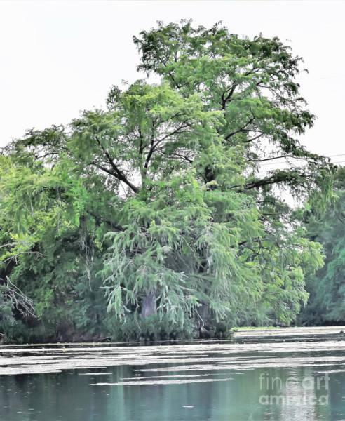 Giant River Tree Art Print