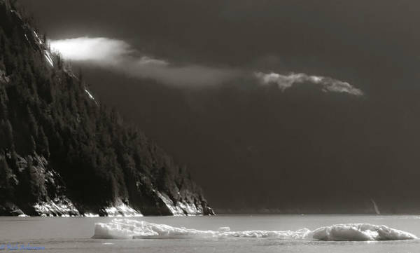 Photograph - Giant Sitka Spruce Trees On The Shore Of Tracy Arm, Ak by Rich Ackerman
