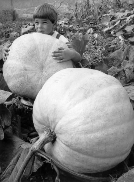Vegetable Garden Photograph - Giant Turban by Keystone