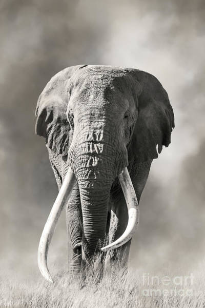 Wall Art - Photograph - Giant Tusked Bull Elephant In Amboseli, Kenya by Jane Rix