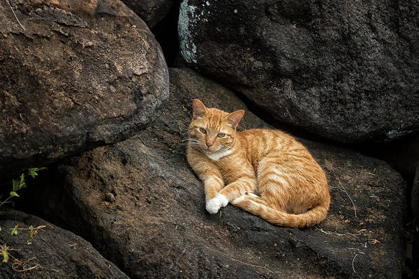Photograph - Ginger Cat On The Rocks by Belinda Greb