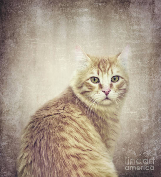 Wall Art - Photograph - Ginger by Flo Photography