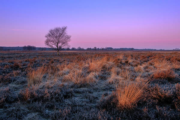 Photograph - Ginkelse Heide by Mario Visser