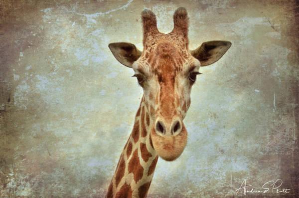 Photograph - Giraffe by Andrea Platt