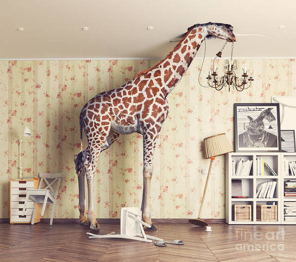 Furniture Wall Art - Photograph - Giraffe Breaks The Ceiling In The by Zastolskiy Victor