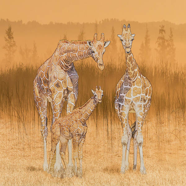 Photograph - Giraffe Family Portrait by Patti Deters