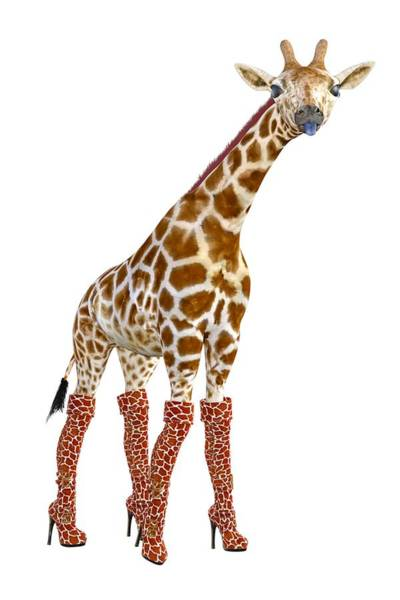 Wall Art - Digital Art - Giraffe Funny Pose by Betsy Knapp