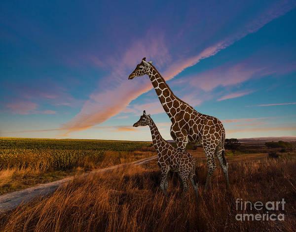 Wall Art - Photograph - Giraffes And The Landscape by Nexus 7