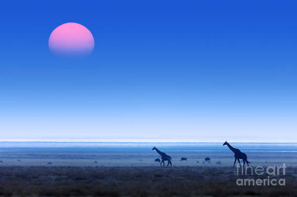 Hazy Wall Art - Photograph - Giraffes Giraffa Camelopardalis Walking by Johan Swanepoel