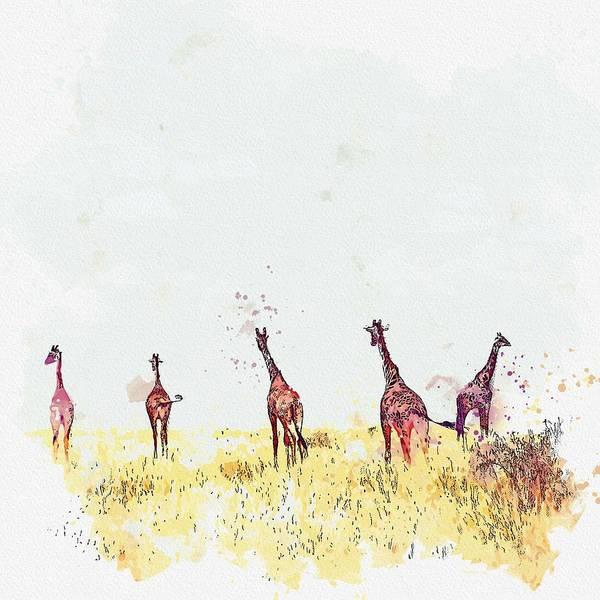 Painting - Giraffes, Masai Mara National Reserve, Kenya -  Watercolor By Ahmet Asar by Ahmet Asar