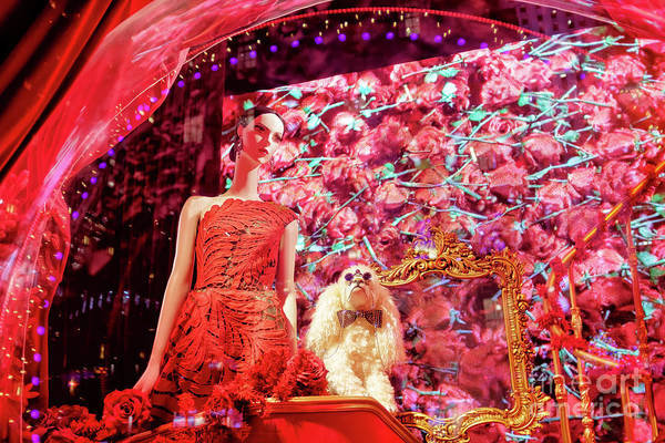 Photograph - Girl And The Poodle At Saks Fifth Avenue In New York City by John Rizzuto