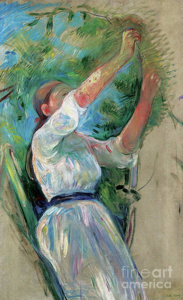 Wall Art - Painting - Girl Picking Cherries, 1891 by Berthe Morisot